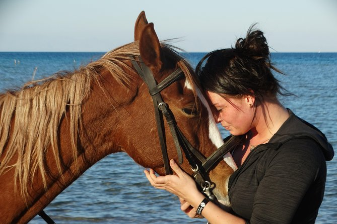 Horse Riding 3 Hours (Beach, Dessert, Swimming) - Hurghada