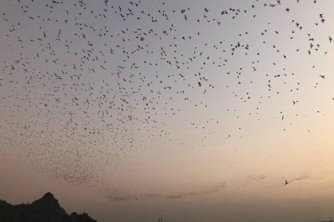 Bats Cave Visit in Hpa-An (evening tour)