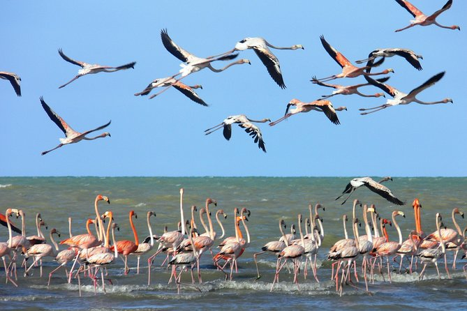 Bird watching: Santa Marta & the Guajira Peninsula