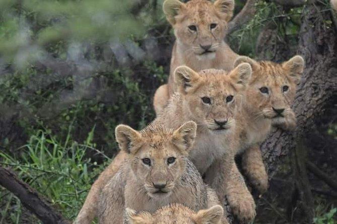 3 Days safari Tarangire , Ngorongoro and Lake Manyara