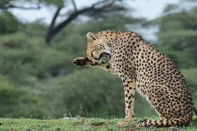 3 Days Lodge mid range safari normal route