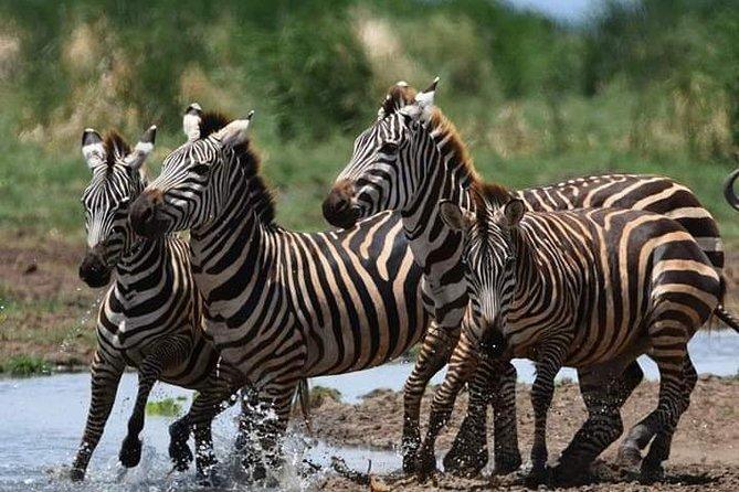 2 Days safari Lake Manyara National Park and Ngorongoro crater