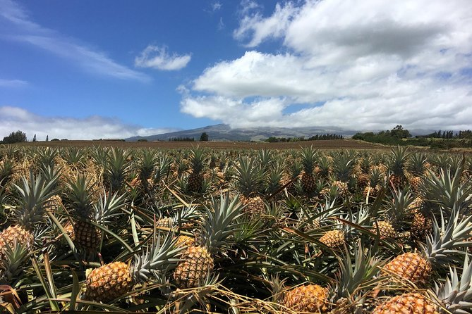 PRIVATE Pineapple Tasting: Coffee, Farm, Winery, Distillery, Brewery & Lunch