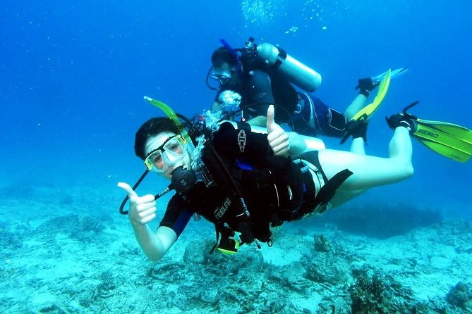 Professional Daily Diving Sea Trip (Two dives & Wreck) - Hurghada