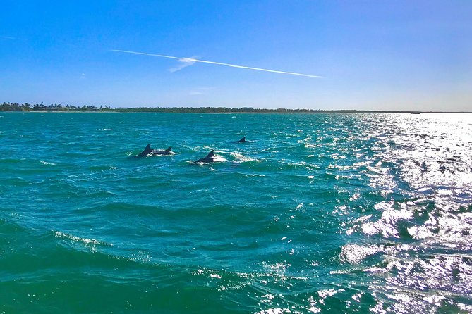 Florida Eco Charters Dolphin & Sunset Boat Cruise
