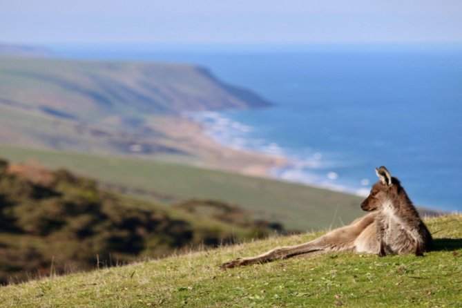 Fleurieu Explorer - Full-Day Tour