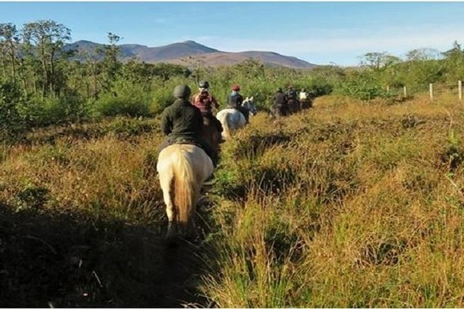 Killarney National Park Horseback Ride. Co Kerry. Guided. 3 hours. photo 4
