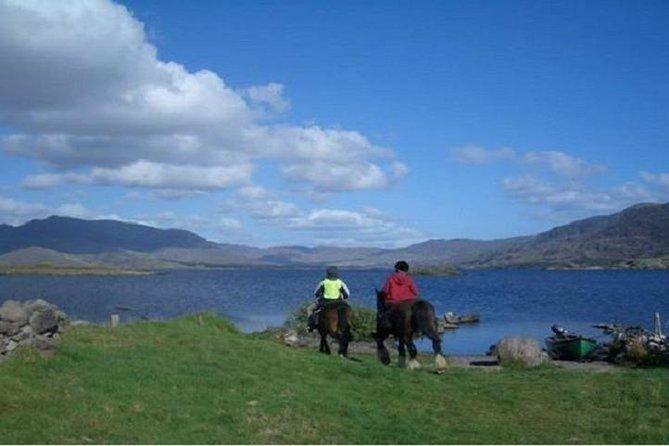 Killarney National Park Horseback Ride. Co Kerry. Guided. 2 hours.