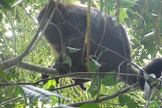 Howler Monkey Sanctuary Shore Excursion from Belize City photo 2