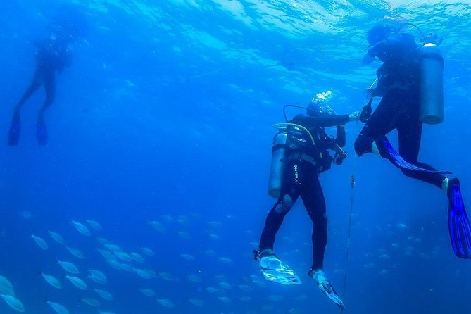 Discover the Diving