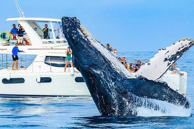 Whale Watching in Catamaran