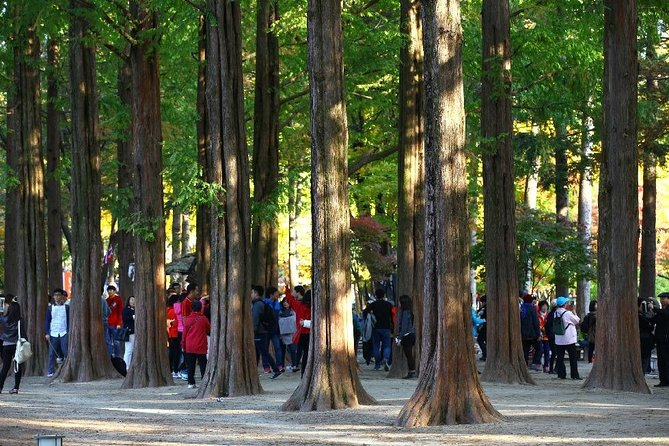 [PRIVATE] Nami Island Tour including Petite France and Garden of Morning Calm