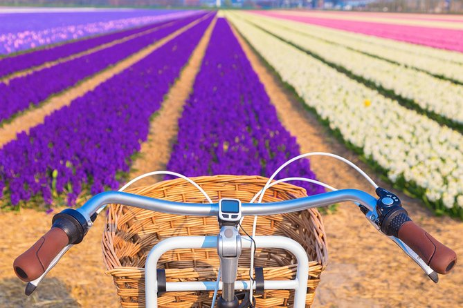 Enjoy the tulip fields by bicycle with a local guide! Tulip bike tour!