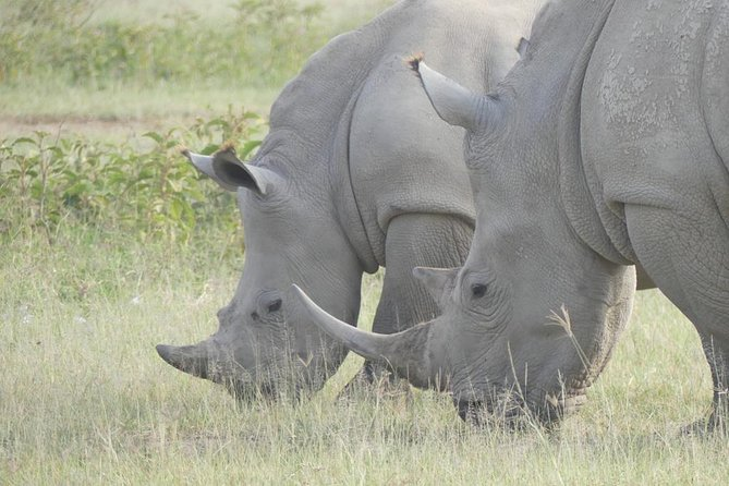 Half Day Nairobi National Park Safari