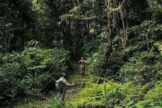 4-Days Uganda Gorilla Trekking and Wildlife Safari