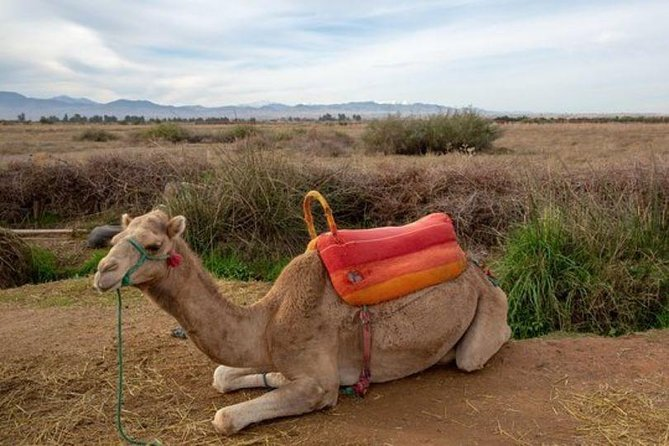 Atlas Mountains and Three Valleys & Waterfalls - Camel ride Day Trip Marrakech photo 14