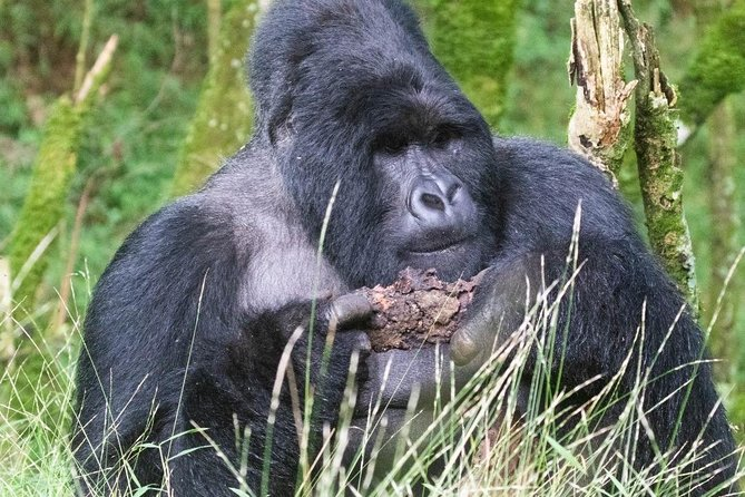 5 Days Uganda Gorilla, Chimpanzee and Wildlife Safari