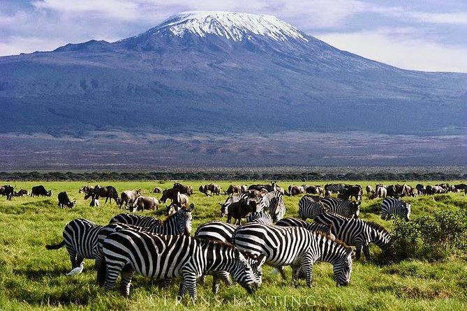 Snow capped views of Mt. Kilimanajro in Amboseli photo 8