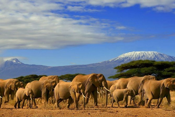 Snow capped views of Mt. Kilimanajro in Amboseli photo 2