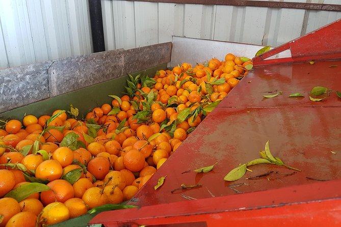 Orange Farm and Silves Food Tour