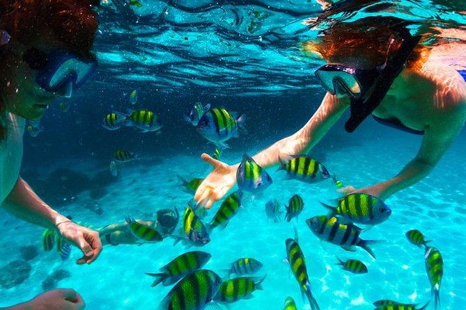West Bay Aquarium Snorkeling, Chocolate & Rum Factory, City Tour plus Transfer