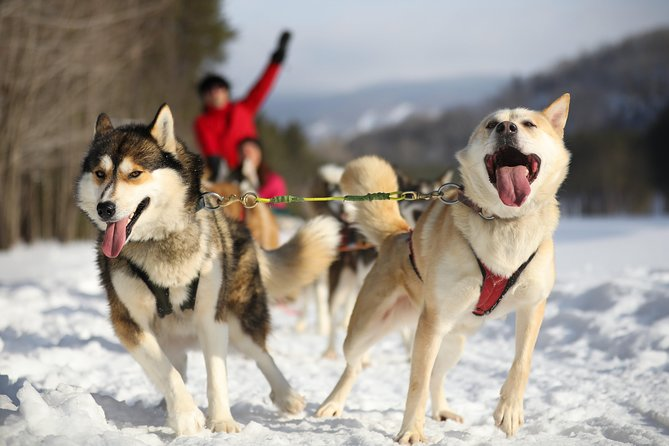 Dogsled Adventure in Mont-Tremblant