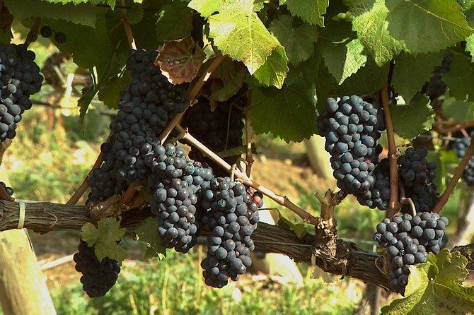 East Kelowna Wine Tour - Classic - 6 Wineries