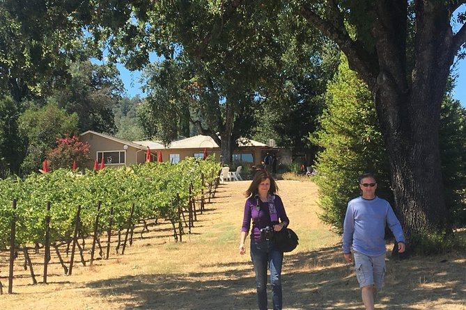Experience Mendocino Wine and Redwoods 1-Day Tour