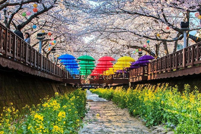 From Busan : Private cherry blossom tour during Jinhae Naval port festival