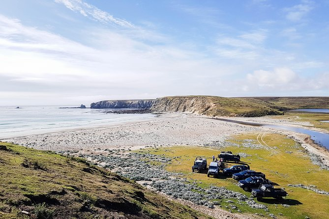 Seal Bay Tour