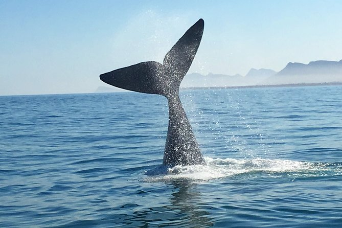 Whale Watching Tour -Hotel Pick up, Drop Off and Transfer
