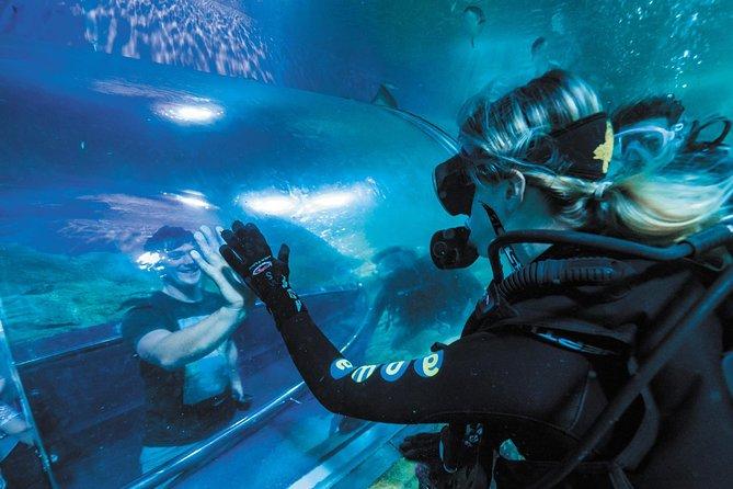 Dive with Sharks at AQWA