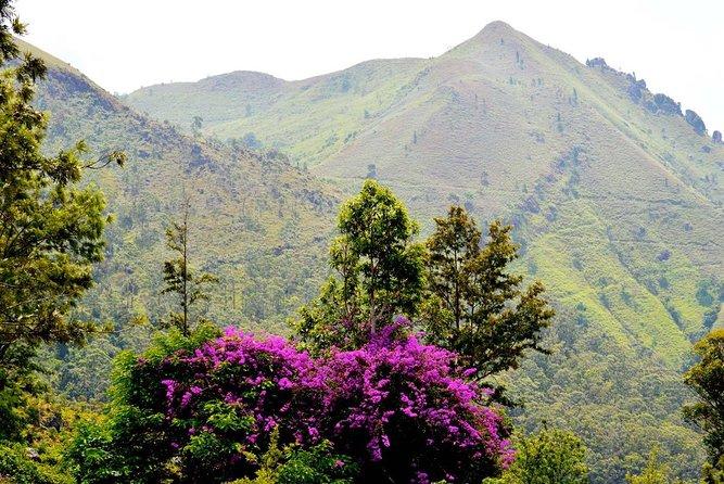 Meditative Hike Across Three Landscapes in Ella