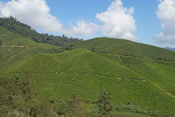 Lush Cameron Highlands Tour photo 12