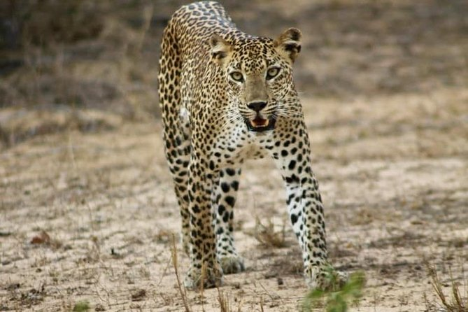 Yala Wild Safari Tours