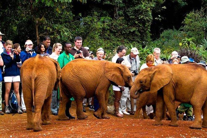 David Sheldrick Elephant Orphanage Half-Day Tour from Nairobi