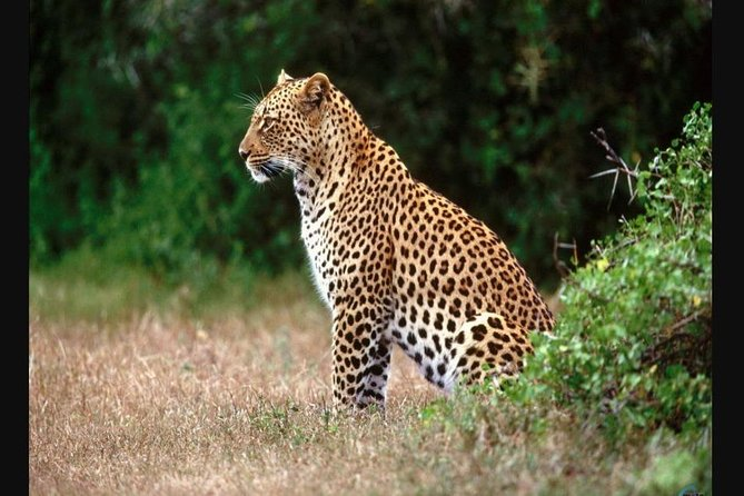 Hluhluwe Imfolozi Game Reserve 1 Day Tour From Durban photo 4