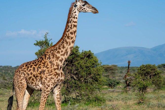 3 Day Safari Tarangire, Ngorongoro & Lake Manyara