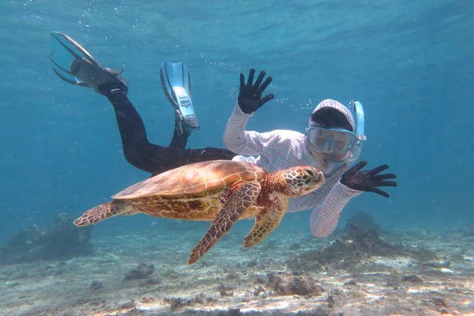 [Miyakojima Snorkel] Private tour from 2 people ♪ Let's look for sea turtles! Snorkel tour that can be enjoyed from 3 years old ☆