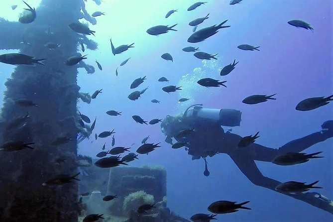 Discover SCUBA Diving with Pissouri Bay Divers photo 10