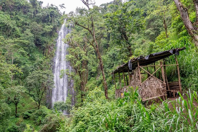 Materuni Waterfalls, Coffee & Cultural Tour Day trip photo 1