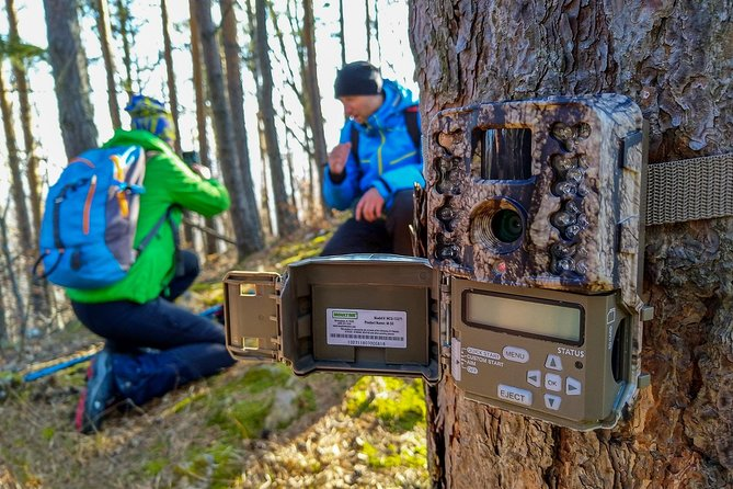 From Brasov: Wildlife tracking in Putna Vrancea Natural Park