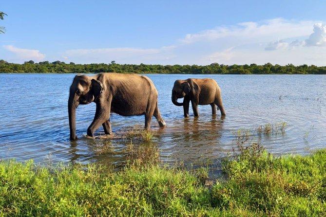 Udawalawa National Park With Supun Safari | Enjoy Your Vacation