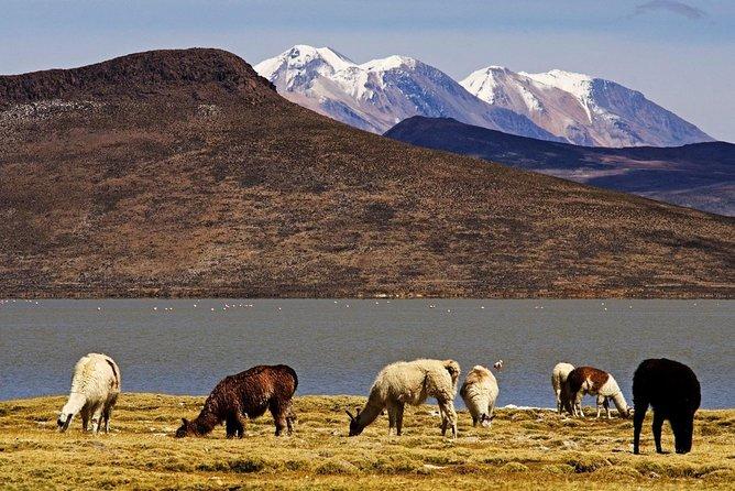 Salinas y Aguada Blanca Full Day Reserve