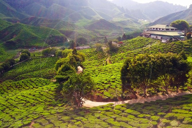 Sightseeing Cameron Highlands From Ipoh Secrets