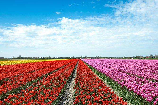 Tulip Fields of Holland tour Seasonal