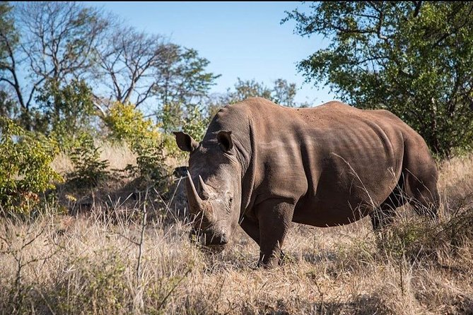 Game Drive and Rhino Viewing Safari