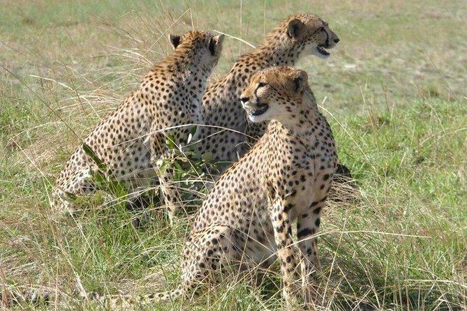 Chobe Day Trip -Botswana