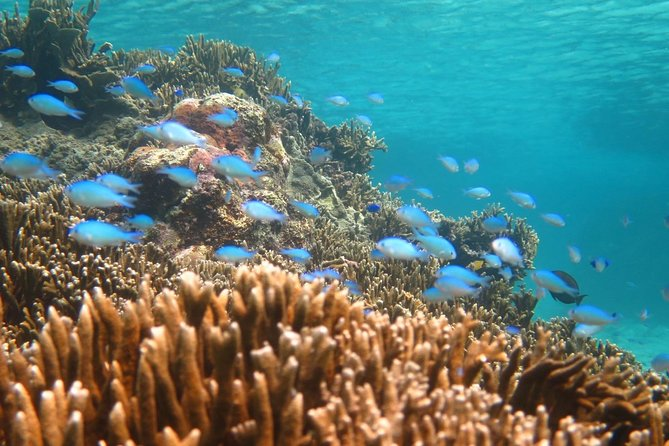[Miyakojima Snorkel] Private tour from 2 people ♪ Enjoy from 3 years old! Enjoy Nemo, Coral and Miyako Blue