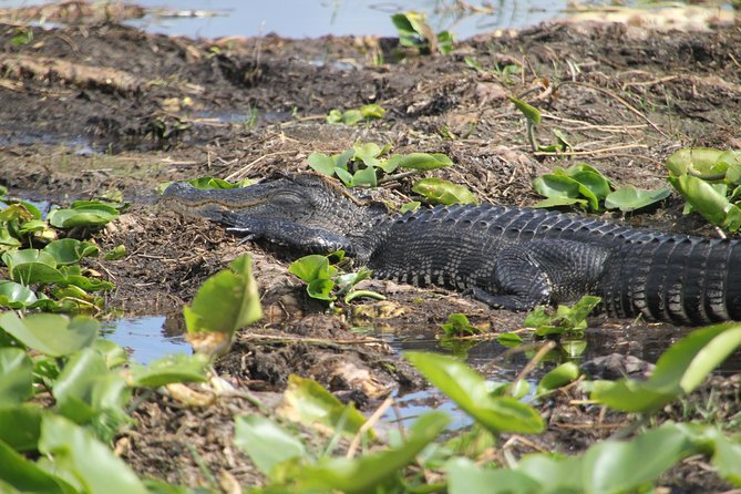 VIP Private Airboat Tour by Boggy Creek Airboat Adventures near Orlando, Florida